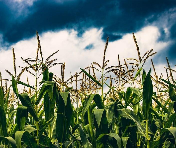Mercado Agrícola: Resumo da semana