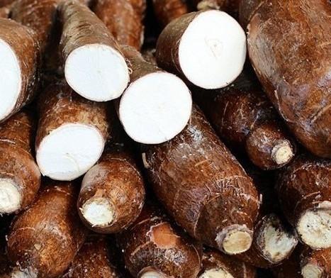 Raiz de mandioca custa R$ 340 a tonelada em Umuarama