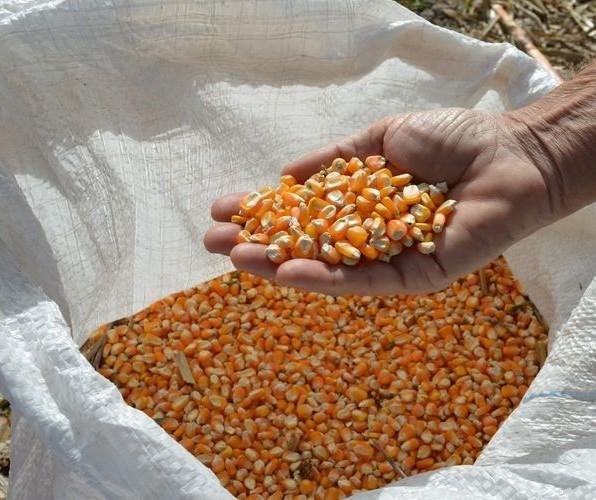 Soja, milho e café registraram valorizações