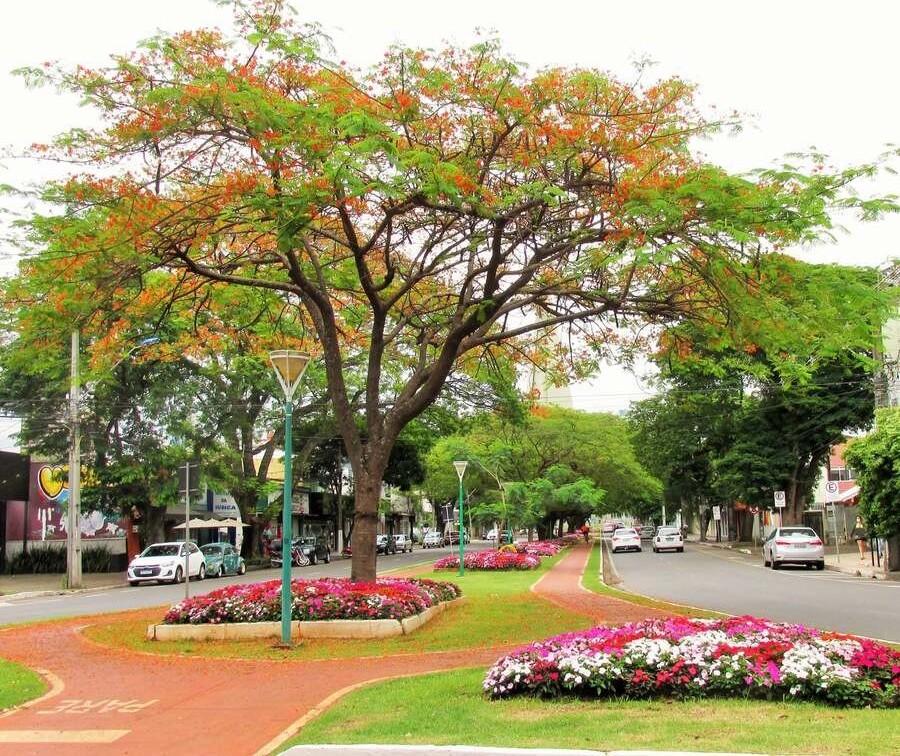 Tempo estável e máxima de 30ºC neste feriado em Maringá