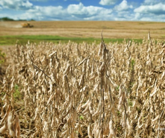 Um balanço dos preços da soja praticados nessa safra 2019/2020