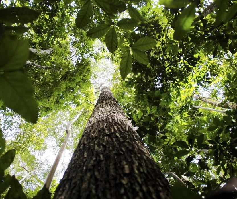 Setor florestal atinge US$ 4,2 bilhões em exportações