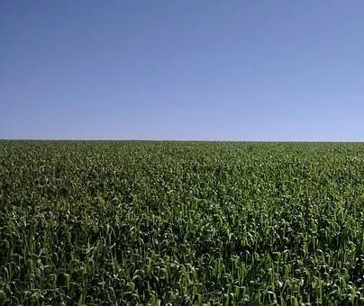 Governo anuncia medidas para amenizar dificuldades do setor agropecuário