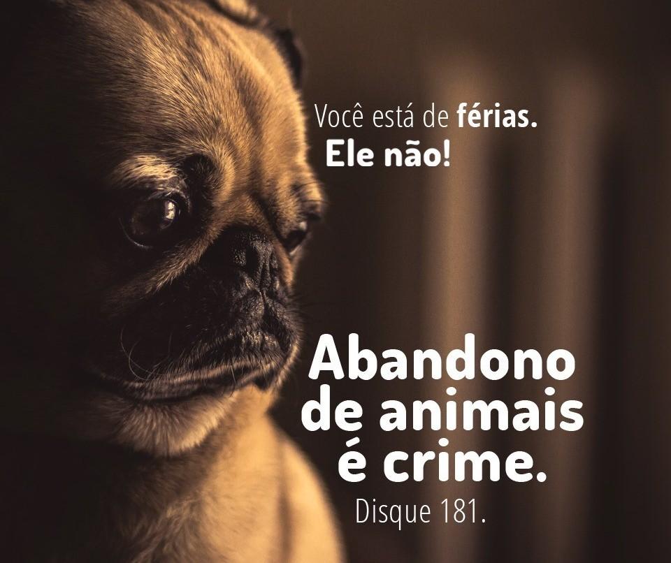 Abandono de animais é crime