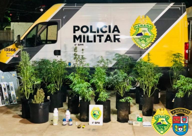 Polícia descobre casa com plantação de maconha em estufa