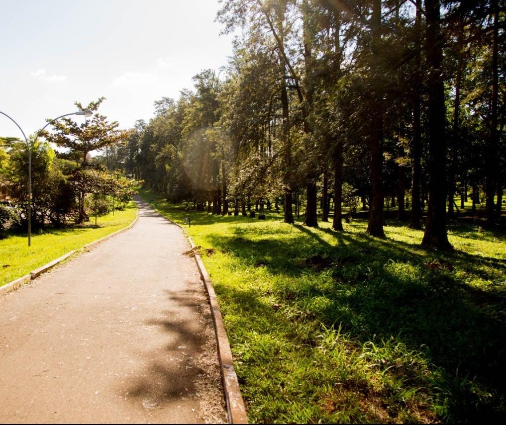 Plano de Arborização de Maringá entra em consulta pública