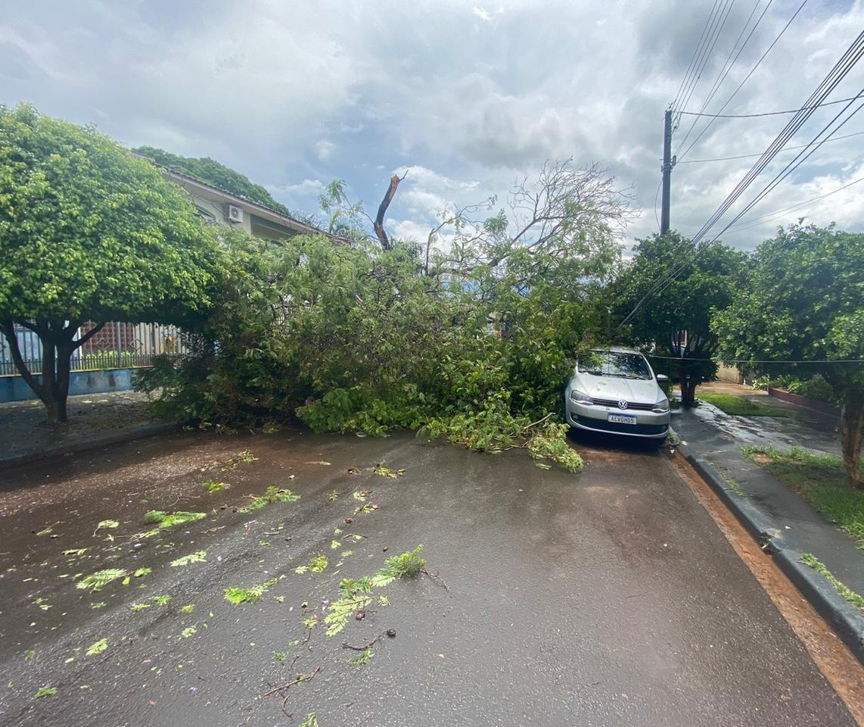 Chuva derruba quatro árvores em Maringá. Veja imagens