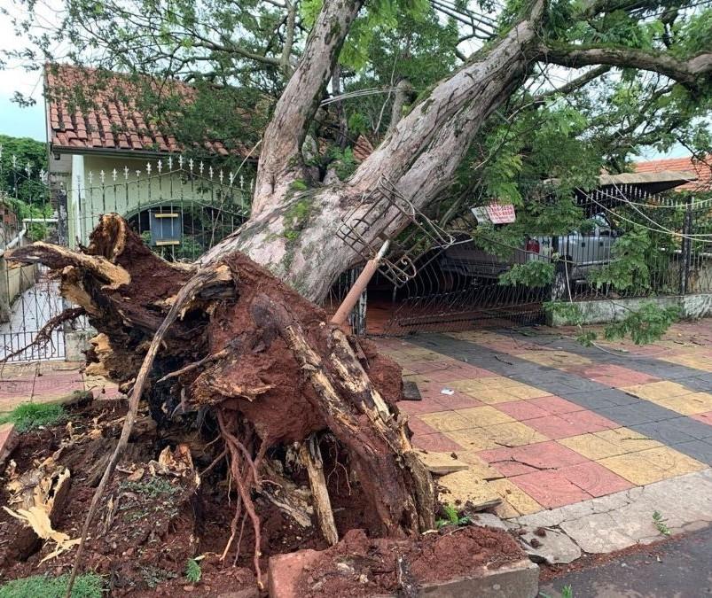 Sobe para 30 o número de árvores caídas em Maringá após temporal