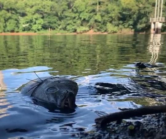 Peixes do Parque do Ingá são retirados nesta sexta-feira (12)