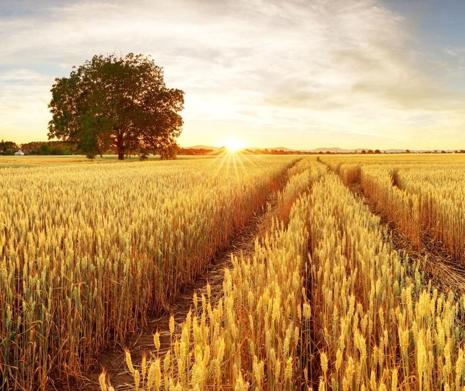Paraná tem mudanças no zoneamento do trigo