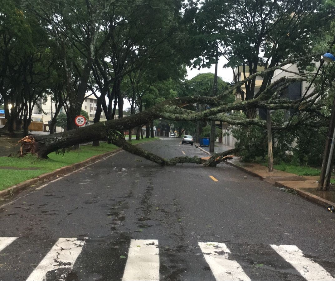 Defesa Civil Municipal recebeu mais de 40 chamados por causa de estragos da chuva
