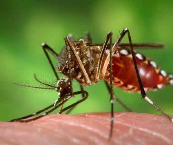 Todas as dez cidades que entraram em epidemia de dengue são da região noroeste