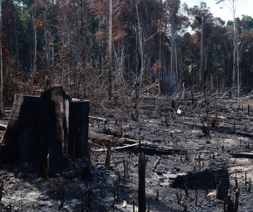 Grupo exige que o governo brasileiro freie o desmatamento no país como condição para continuar investindo