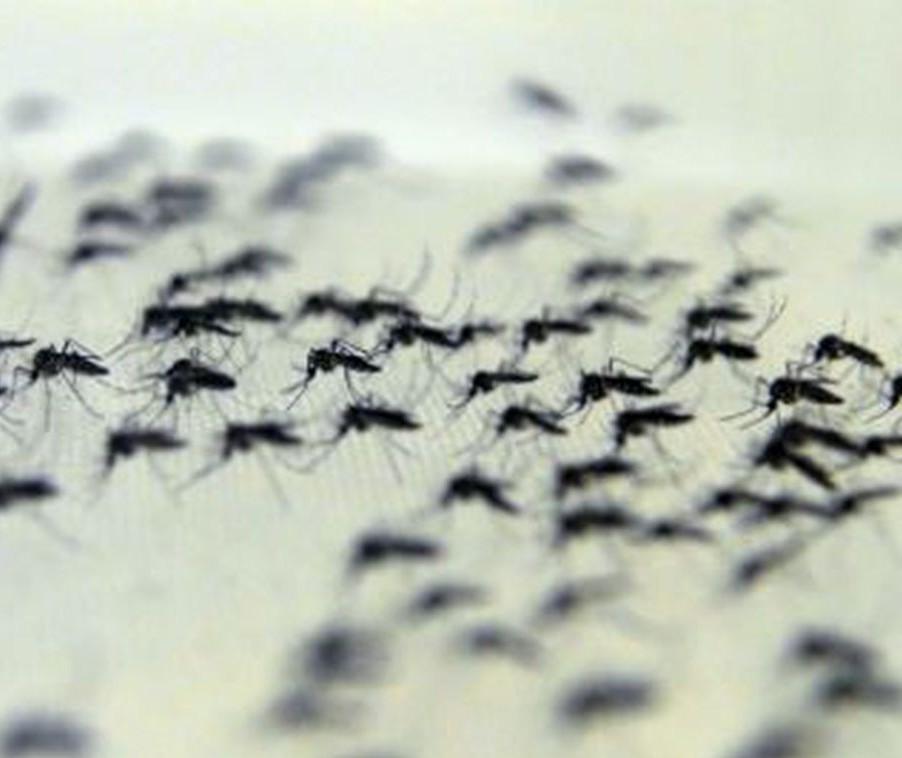 Em uma semana quase cem casos de dengue são confirmados