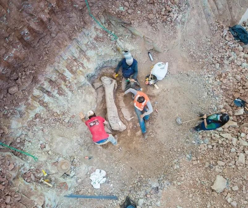 Pesquisadores de Maringá participaram de descoberta de fóssil de titanossauro