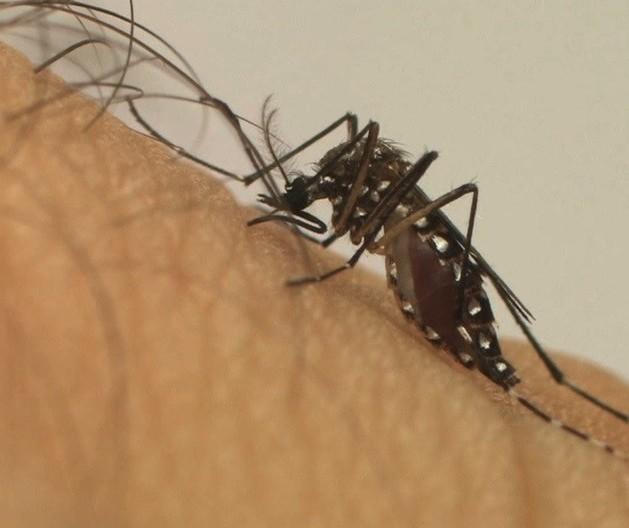 Nova Esperança entra em epidemia de dengue