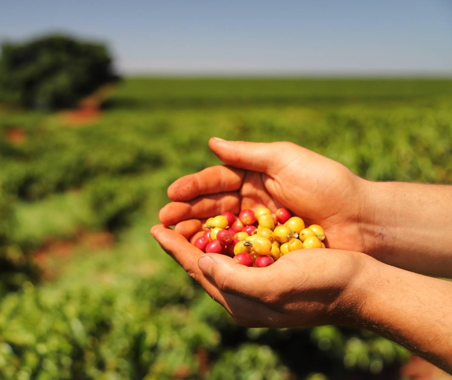 Exportações de café totalizam recorde de volume físico