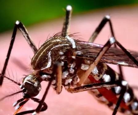 Paraná registra 37 novos casos de dengue no período epidemiológico; 3 em Maringá