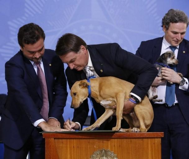 Presidente sanciona lei que pune com prisão maus-tratos a cães e gatos