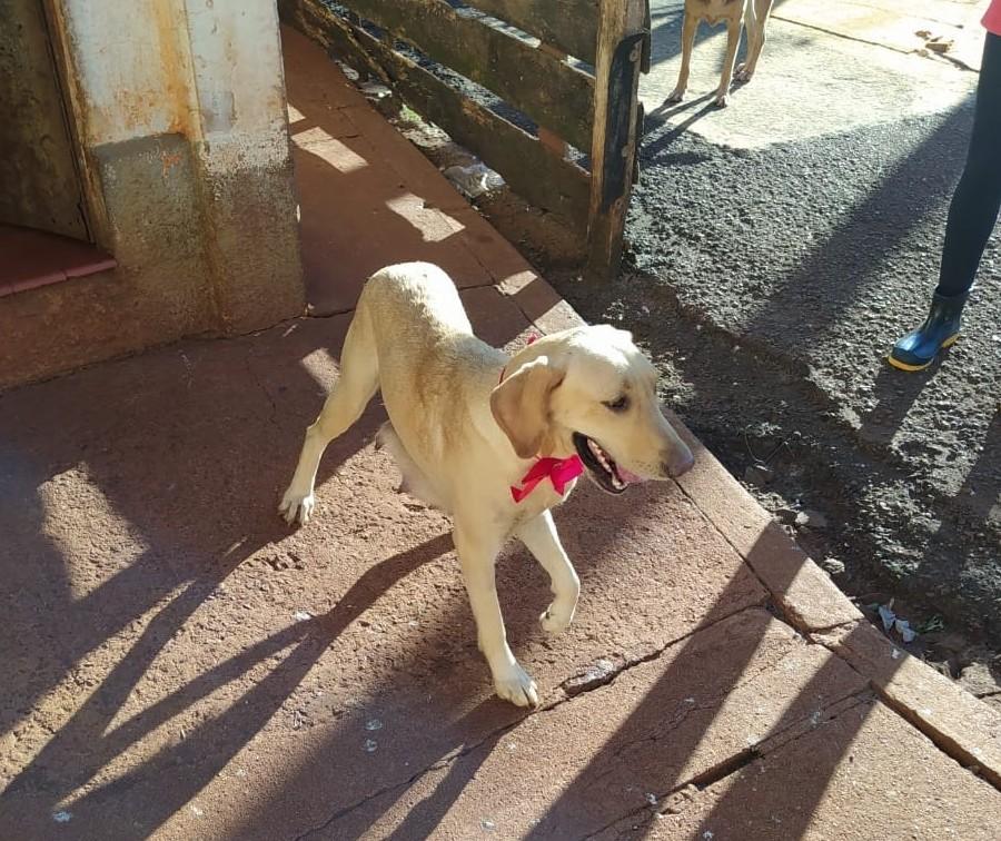 Cadelinha Lanna, de morador de rua, está em abrigo de Maringá