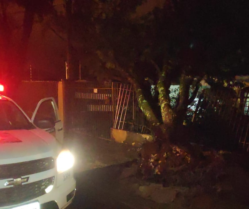 62 árvores caíram em Maringá durante vendaval