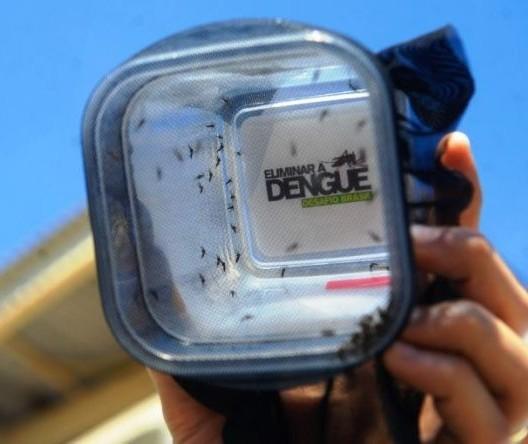 Em 10 anos, região de Maringá registrou mais de 47 mil casos de dengue